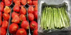 thumb_erdbeeren-spargel